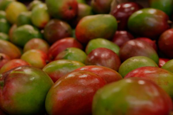 importacion-vegetales-pasaporte-fitosanitario-maritima-del-estrecho